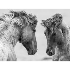 Wild Brumby Reflections Canvas Wall Art