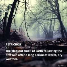 One of my favorite scents. #petrichor #firstrain#rain  Yessss