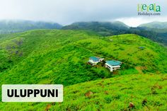 #Explore_the_Unexplored - Travel Series DESTINATION 10: Uluppuni (Idukki, Kerala)  The major attraction of Uluppuni is the picturesque meadows. whoever visited Vagamon might have seen the real beauty of meadows there. One can see the even better version of the meadows at Uluppuni. Travelers visiting Vagamon can definitely consider this beautiful destination in their travel bucket. Uluppuni is around 16kms from vagamon towards pulikanam route.