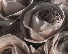 Taupe Color, Collections, Plants, Plant, Planets