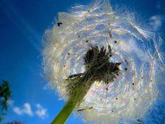 """Traeumerle: Mal durch die (Puste)Blume gesagt: """"Das Wetter ist im Moment schön!"""" :)"""