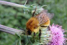 Mehiläinen, Kukka, Puu, Luonne