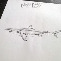 Dotwork shark tattoo forearm