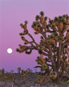 Night fall.   Full Moon and Pink Sky in the Arizona Desert...