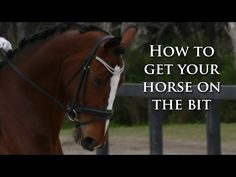 How To Get Your Horse On The Bit (Without Pulling) - Dressage Mastery TV Ep4 - YouTube