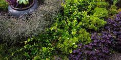 Layered Hedges, Matte Black Pot Lillyvilla Gardens Portland, OR