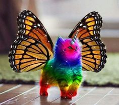Because sometimes you just need a rainbow butterfly unicorn kitty ;) ♪☆♫♡♫☆ :)   ♪☆♫♡♫☆:)