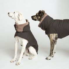Designer Dog Collars, Dog Accessories, Dog Beds for Sale Australia Designer Dog Collars, Dog Apparel, Beds For Sale, Pet Furniture, Dog Coats, Dog Accessories, Dog Design, Large Dogs, Dog Friends