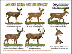Updates to our almost famous aging deer on the hoof poster.  Looks a lot cleaner this year! Get the poster on Amazon (link below).