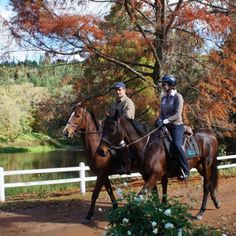 Horse riding in the winelands, South Africa Adventure Tours, Adventure Travel, Travel Activities, Horse Riding, South Africa, Horses, Explore, Landscape, Animals