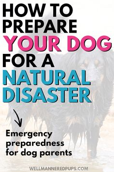 Emergency preparedness for dog owners/parents. How to prepare your dog for a natural disaster + a pet preparedness checklist. Dog Safety, Safety Tips, Central Park Manhattan, Honeymoon Places, Covered Bridges, Natural Disasters, Emergency Preparedness, Night Photography, Dog Owners