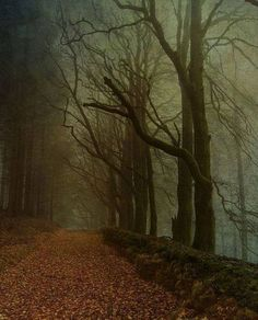 Dark Wood, Devon, England