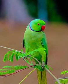 llbwwb: (via / Parrot by Ryan Khine) Cute Birds, Pretty Birds, Beautiful Birds, Animals Beautiful, Colorful Animals, Colorful Birds, Tropical Birds, Exotic Birds, Cute Baby Animals