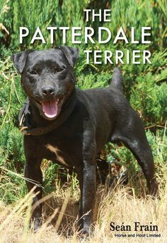 The Patterdale Terrier- Sean Frain This book is a detailed study of the Patterdale terrier which covers everything the owner or prospective owner needs to know. Patterdale Terrier, Lakeland Terrier, Dog Books, Small Dog Breeds, Small Dogs, Hunting Dogs, Cool Pets, Working Dogs, Beautiful Dogs