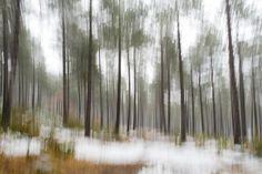 #bosque #nevado #movimiento #desenfoque