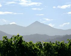 Travel Photo of the Day: New Zealand Wine Country