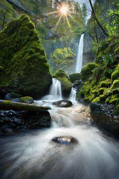 Oregon's rainforest & the suns  Luminence are gorgeous!