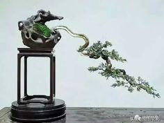Bonsai Trees, Table Lamp, Lighting, Beautiful, Pots, Home Decor, Garden, Ideas, Lamp Table