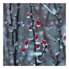 http://karolina-g-patrzy.blogspot.com/2010/12/20101224-26.html