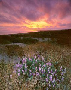Sunset, Limantour Beach, Point Reyes National Seashore; California; Marin County California