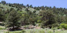 at Dinosaur Ridge Morrison, CO