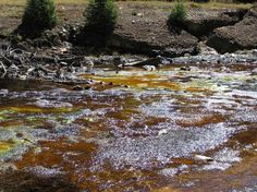 Research Summary: Microbiology of Acid Mine Drainage (Mark R. Stanton) Description: Iron-rich wetland resulting from weathering of sulfide minerals from nearby country rock near Silverton, Colorado.