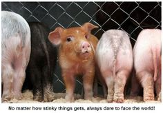 I love piglets, and this one's red headed.  SCORE.