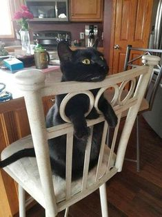 Cat shows you the right way to use chair holes http://www.imagesforpets.com/cat-shows-you-the-right-way-to-use-chair-holes/