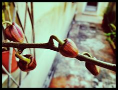 440 - Broto de orquídeas #umafotopordia #picoftheday #brasil #brazil #n8 #snapseed #camerabag2