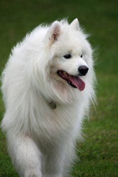 Beautiful dogs 1 (3)