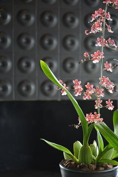 Designed for Megan Ralph Spaces for a hotel, these beautiful matte black ceramic wall tiles offer a unique alternative to wallpaper whilst beautifully complimenting the rest of the interior design.  #ceramic #wallpaper #design #interiordesign #architecture #southafrican #guesthouse #safari #decor #fireplace #tiles #wall #walltiles #featurewall #designideas #designinspo #homerenovations #hotel #renovations #bar