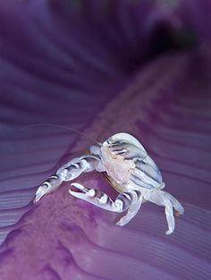 Enhanced view of  microscopic sea creature