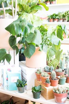 The ZEN Succulent | Plant shop