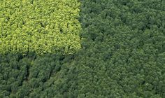 An aerial view of a forest in South Sumatra province, Indonesia, on October 16, 2010.