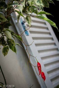 """""""Faça sua sorte."""" @vicky_photos_infantis https://www.facebook.com/vickyphotosinfantis http://websta.me/n/vicky_photos_infantis https://www.pinterest.com/vickydfay https://www.flickr.com/vickyphotosinfantis"""