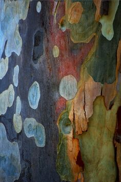 Color inspiration http://indigo—soul.tumblr.com/ Australian Spotted Gum Tree Bark.