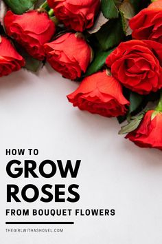 Use your rose bouquets as cuttings to grow your own plants! PRESERVE YOUR CUT FLOWERS! GROW THEM INTO YOUR OWN ROSE BUSH!!! Grow Roses from Cut Flowers | Propagate Roses | How to Grow Roses from Cuttings in Water | How to Propagate Roses | Plant Propagation, Cuttings, Outdoor Shade, Outdoor Plants, House Plants Decor, Plant Decor, Outdoor Landscaping, Landscaping Tips, How To Plant Roses