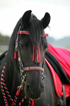 Stunning horse and tack!!