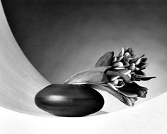 A black and white photograph of a vase with tulips leaning over to the right by the American photographer Robert Mapplethorpe in 1987