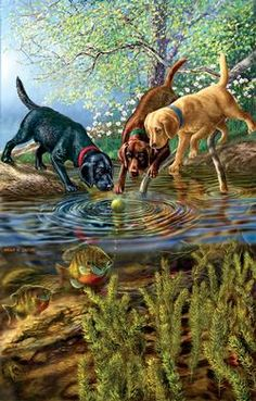 Sunsout's Bubbles jigsaw puzzle with art by James Meger. Animal Paintings, Animal Drawings, Fish Paintings, Pictures To Paint, Art Pictures, Beautiful Artwork, Cool Artwork, Illustration Art, Illustrations