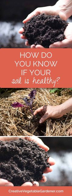 If you don't have healthy soil it's going to be really hard to grow a vegetable garden. Here's how to figure it out.