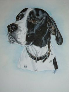 Watercolour commision of English Pointer