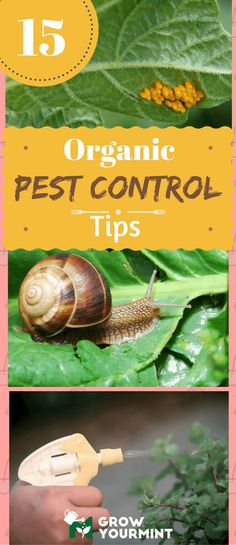 15 best organic pest control tips you should know #organic#pestcontrol#tips#growyourmint.com