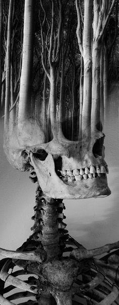 Antonio Mora | art | black & white | skull | trees | quirky | different | dark | moody | bones | earth | forest | mind