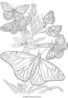 free printable adult Butterfly Coloring Page