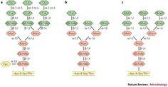 Crianças com uma mutação no gene de codificação MOGS (a glicanos de processamento de proteína) são encontrados para ser imune a muitos vírus | Incrível Ciência | Scoop.it