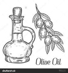 Olive Oil Bottle, Branch With Berry And Leaf Diet Plant Superfood Ingredient. Natural Organic Hand Drawn Vector Sketch Engraved Illustration. Olive Black, Green, Oil. Isolated On White Background - 466718669 : Shutterstock