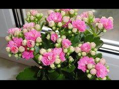 Indoor Plants, Floral Wreath, Wreaths, Flowers, Decor, Google, Youtube, Inside Plants, Floral Crown