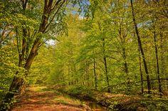 Stream... Spring in Poland by Piotr Guzek on 500px.