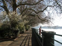 By the river in Bishops Park, Fulham